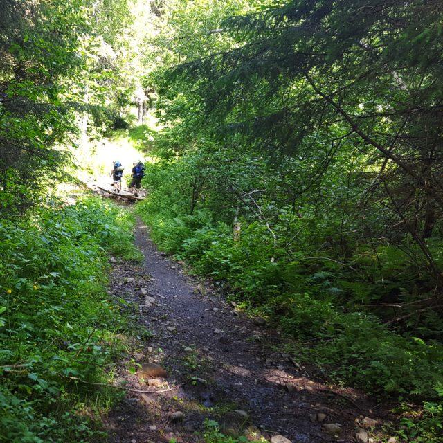 På vei over en bru i skogen.