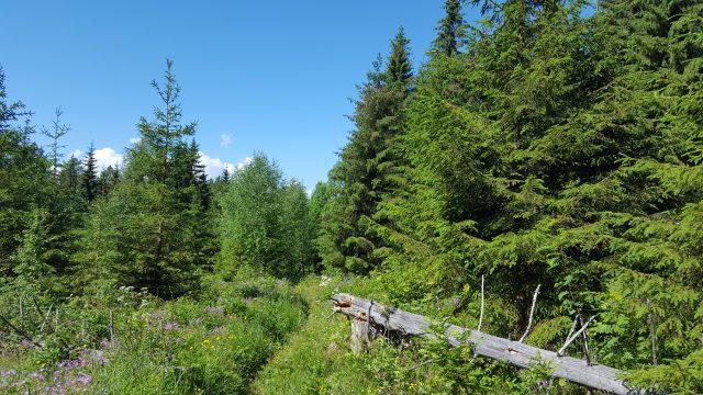 Skikkelig fin skogsti, hadde den bare vart litt lenger.